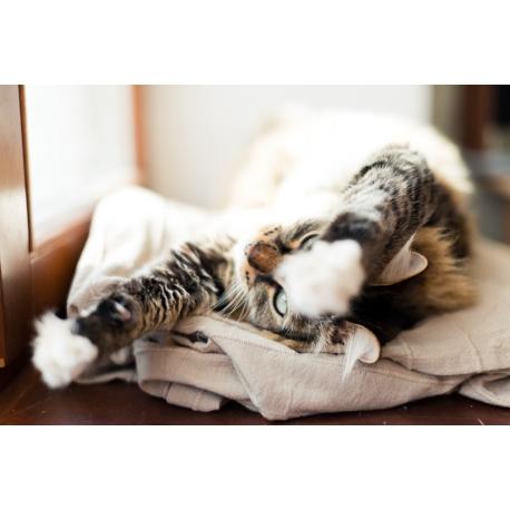 Pour savoir ce qu'il faut faire dans le cas où votre chat pétrit, rendez-vous chez Cat Apart.