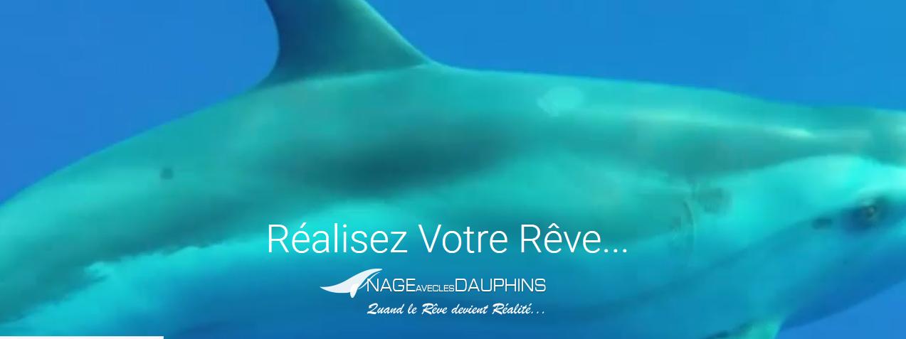 Nager avec des dauphins ? Étonnement, joie et émotion inoubliables !
